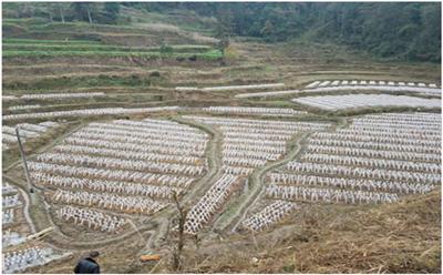 优质稻+食用菌全产业链绿色循环精准扶贫示范