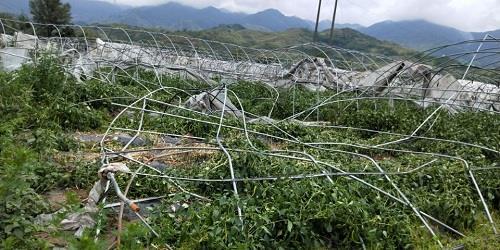 开州竹溪蔬菜基地大棚损毁
