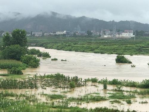 秀山县平凯街道官舟社区玉米遭受洪涝灾