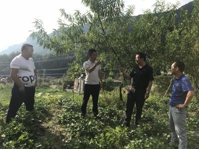 重庆市特色水果产业技术体系负责人熊伟研究员赴巫溪指导脆李产业发展