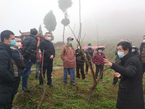 区农业农村委经作站技术人员在龙洲湾街道红炉村开展果树春季管护现场培训