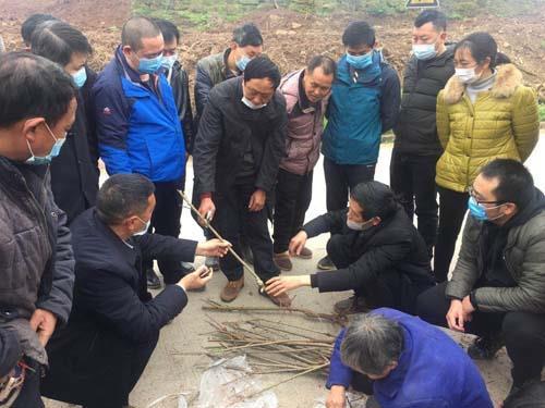 区农业农村委经作站技术人员在丰盛镇王家河村指导东部环线乡村振兴示范项工程