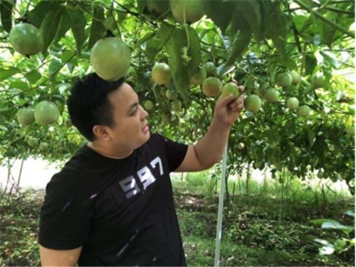 ▲新农人商家庞志玉正在村民的百香果果园里挑果。(摄影 刘生)